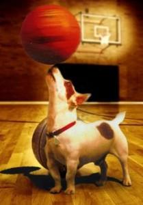 dog basketball